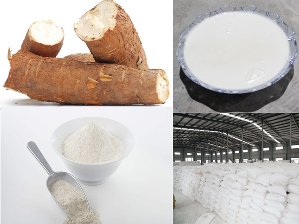 What is the process of extraction of starch from cassava roots?