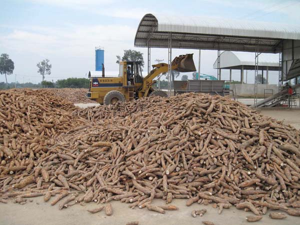 How to set up cassava processing plant ?_Industry news
