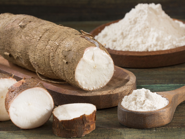 What is process of starch extraction from cassava root ?