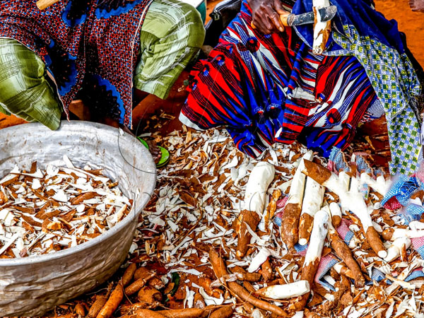 the by-products of cassava processing