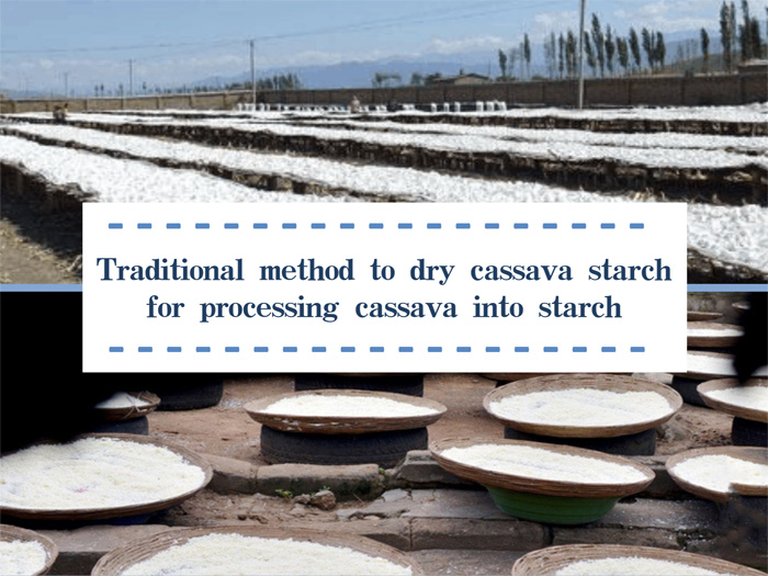 dry cassava starch for processing cassava into starch