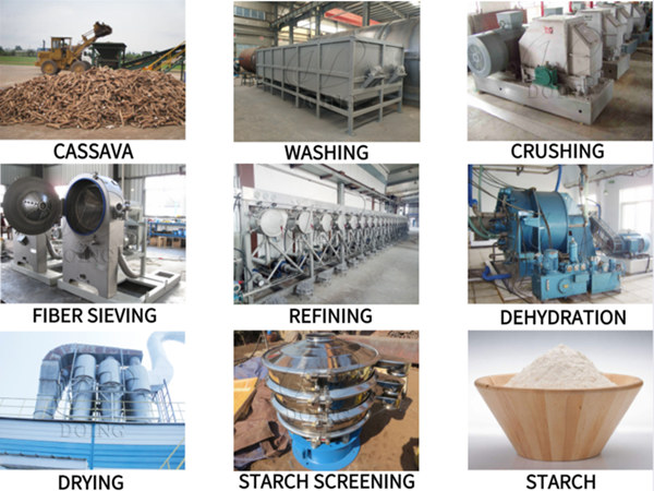 What is the processing stage of cassava in cassava starch processing plant?